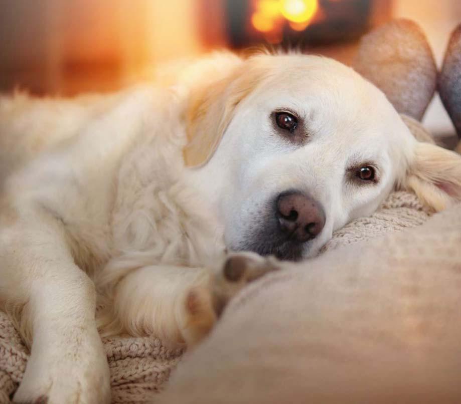 Foto eines Hundes vor einem Kachelofen, der das Gefühl von wohliger Wärme symbolisiert